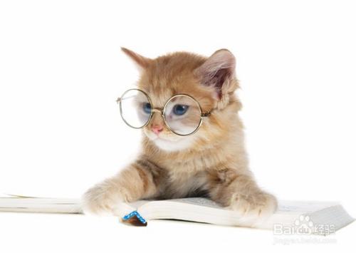 小猫咪晚上叫个不停图片
