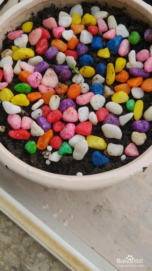 碧光环种子图片