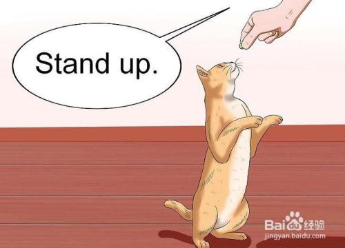 怎么训练猫咪站起来拜年图片