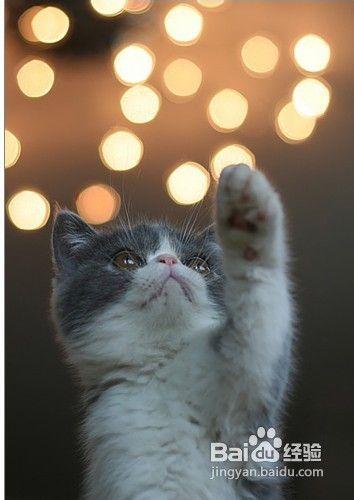 猫咪牙周炎图片
