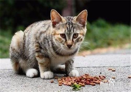 猫挑食可以饿几天图片