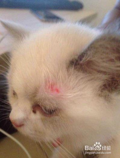 怎么判断猫藓好没好图片