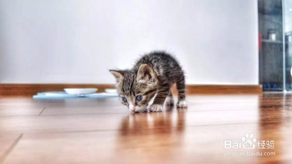 怎么给猫起个好听的名字