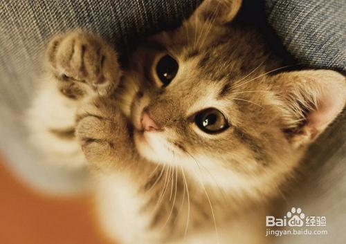 猫咪拉肚子出血怎么办图片