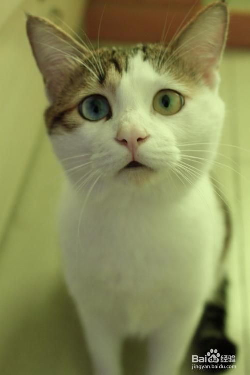 给猫咪驱虫用什么药好图片