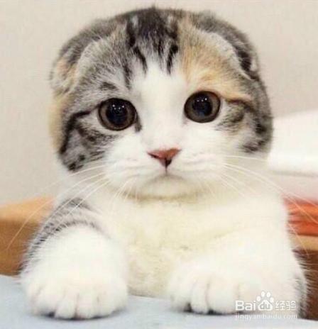 养了几年的猫不想养了图片