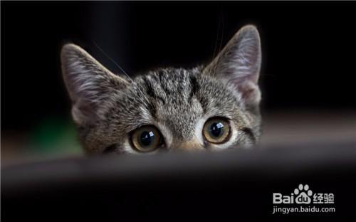 猫咪着凉感冒的症状图片