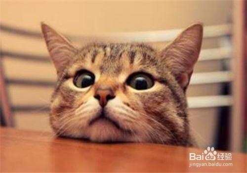 猫挑食饿着有用吗图片