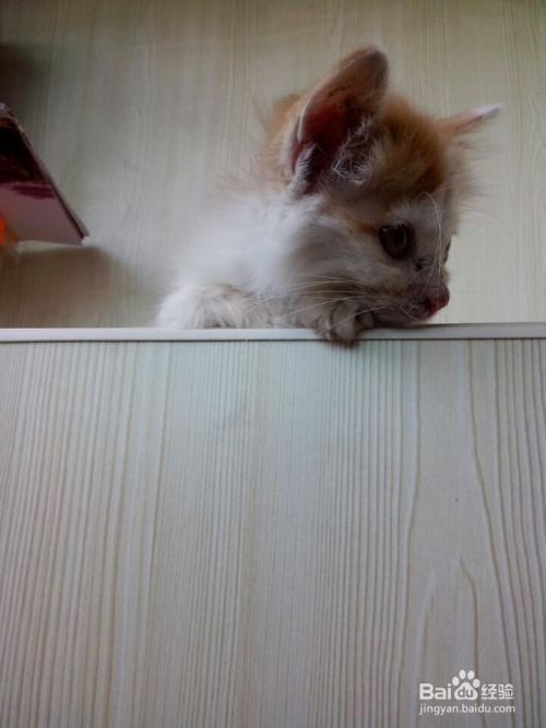 猫咪不尿在猫砂盆里图片