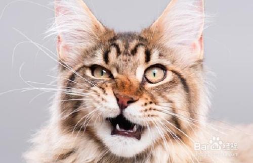 怎么喂猫咪吃胶囊药图片