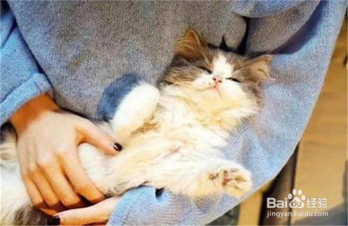 怎么能让猫咪和你更加亲近?