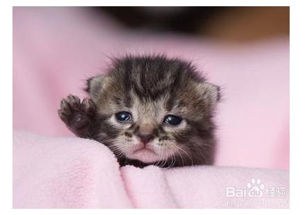 小猫多久断奶送人图片