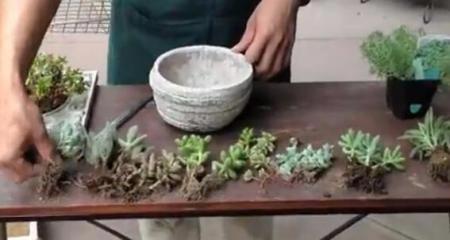 多肉植物盆栽组合技巧图片