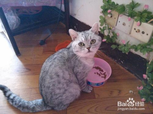 猫咪营养膏成分图片