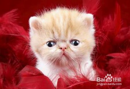 猫咪呕吐黄水是猫瘟吗图片