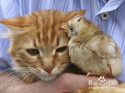 公猫绝育后多久恢复图片