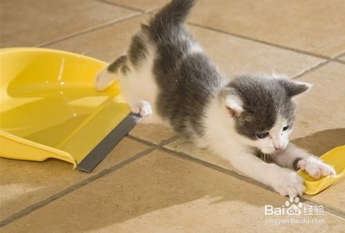 猫咪感冒打喷嚏流鼻涕图片