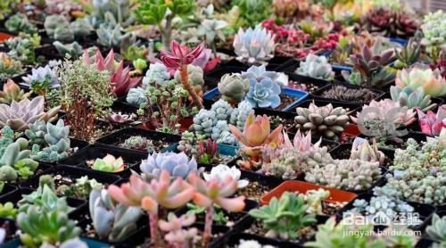 多肉植物种植方法图解图片