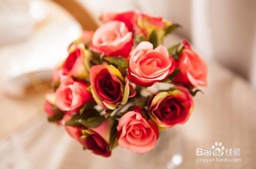 玫瑰花常见的病虫害图片