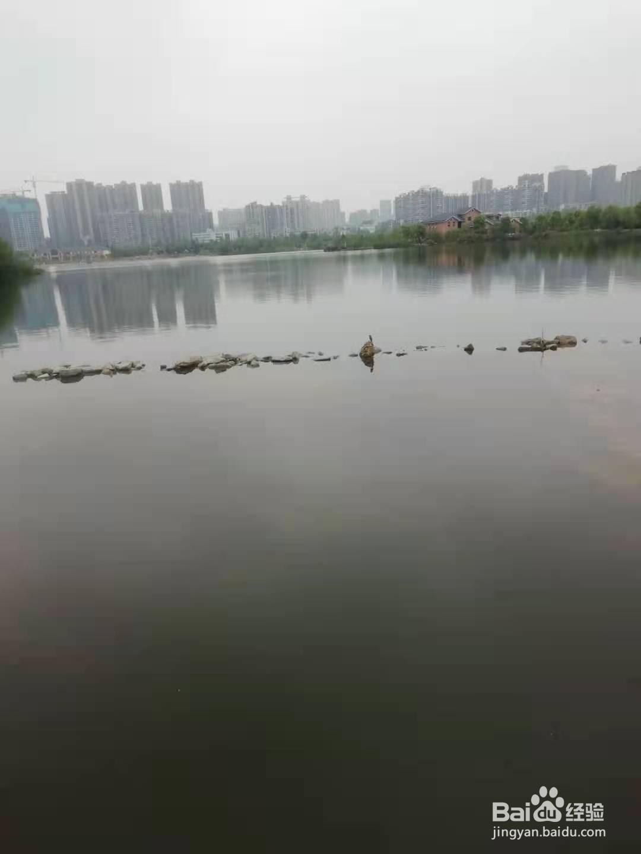 长沙市西湖文化园游玩方法