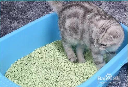 选择猫砂需要考虑的几个问题?