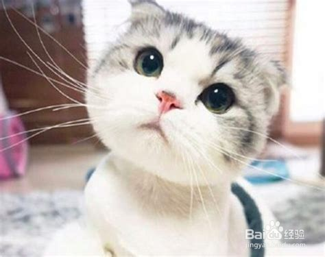 哪几个品种的猫最难养?