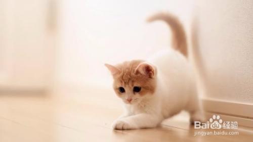 怎么判断猫咪怀孕时间图片