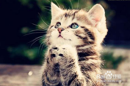 猫咪为什么吐黄水就死图片