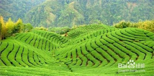宝岛台湾著名十大景点图片
