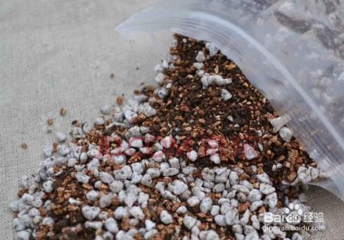 多肉植物土简单配法图片图片