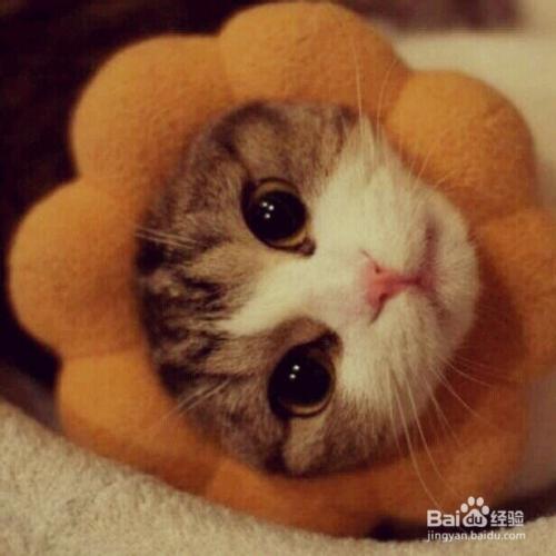 给猫咪驱虫多少钱图片