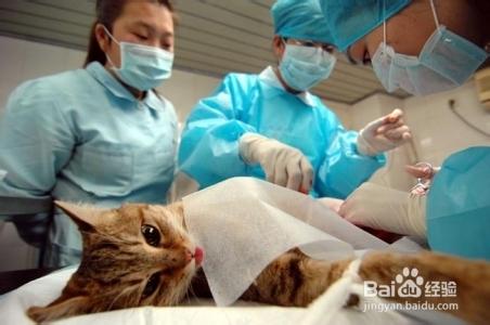 母猫绝育后死亡率大吗图片