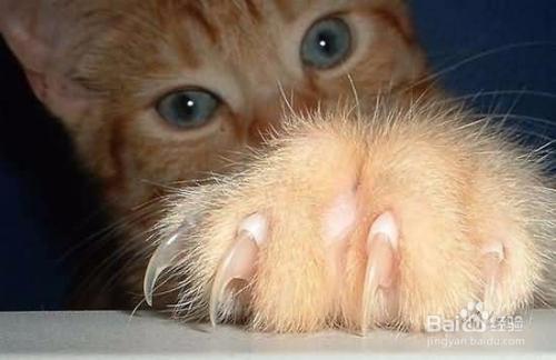 幼猫乱抓乱咬图片