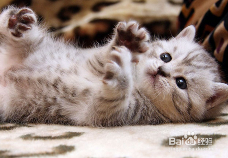 猫咪一直呕吐怎么办图片
