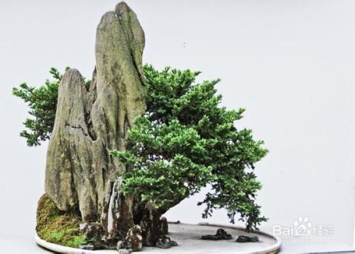 天津适合养什么花或植物图片