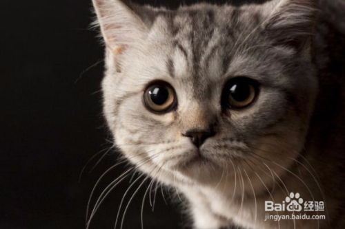 野猫能养吗图片
