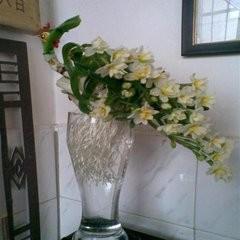 水仙花栽培方法图片