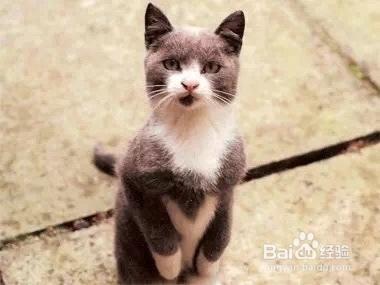 如何训练猫咪用猫砂图片