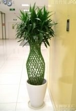 春节开花的盆栽花卉图片