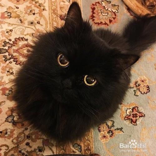 为什么养黑猫的比较少?