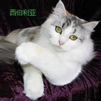缅因猫5个月多少斤正常图片