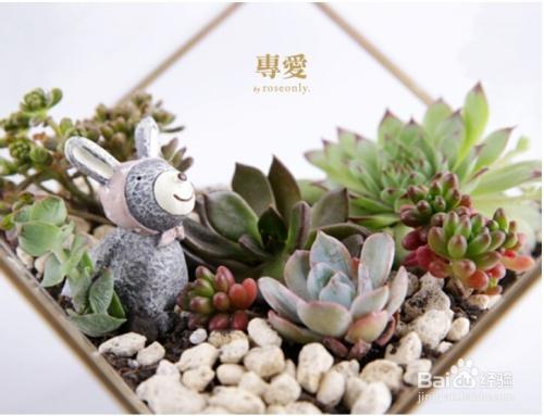 多肉植物冬季养护注意事项图片