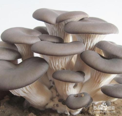 平菇炖嫩豆腐