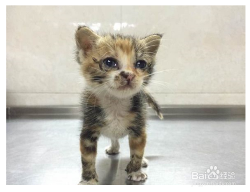 小猫几个月断奶最好图片