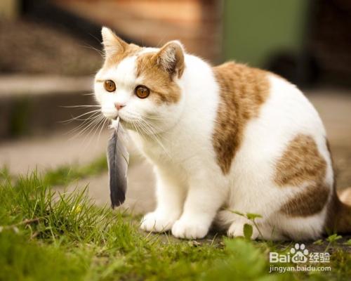 猫上吐下泻是什么病图片