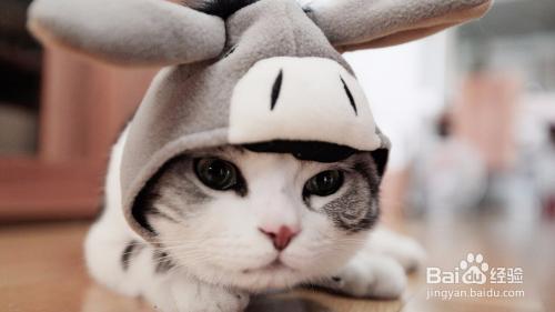 猫咪着凉拉肚子怎么办图片