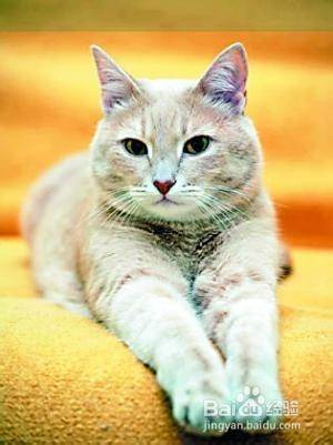 猫咪脂肪肝图片