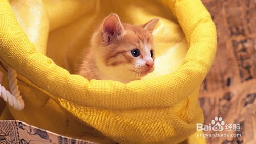 幼猫感冒症状图片