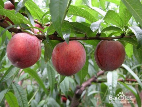 夏季常吃的几种主食小吃  水果 第1张
