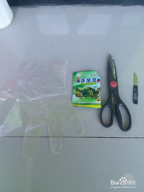大型发财树剪枝怎么剪图片